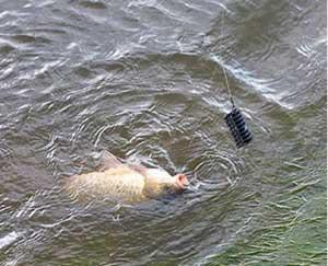 Секреты рыбалки ловли на фидер!
